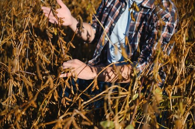 Рука фермера, держащая семена сои. здоровый органический продукт. концепция хорошего урожая.