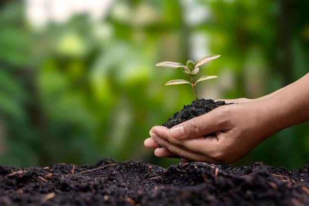 농부의 손으로 땅에 묘목을 심고 사회적 재조림과 재조림 개념을 가진 흐린 녹색 배경.