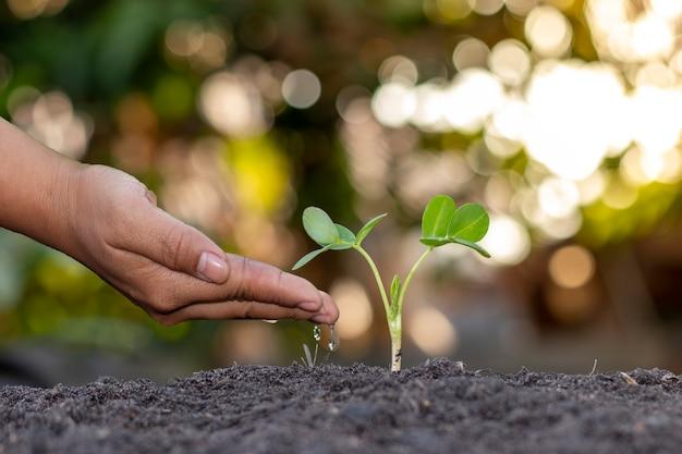 농부의 손 심기, 녹색 배경에 어린 식물에 물을주기, 천연 식물 파종 및 성장의 개념.