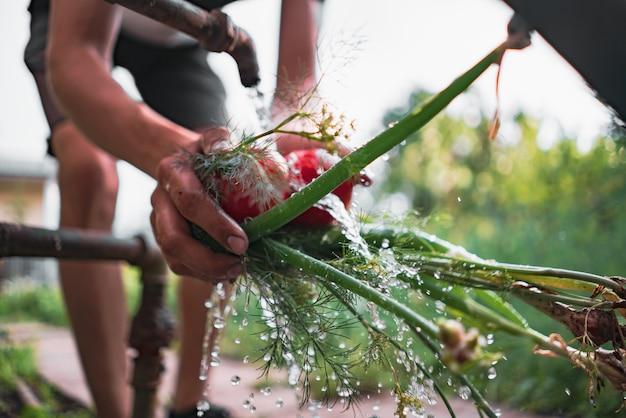 水しぶきで庭の緑のハーブと野菜を洗う農民の手
