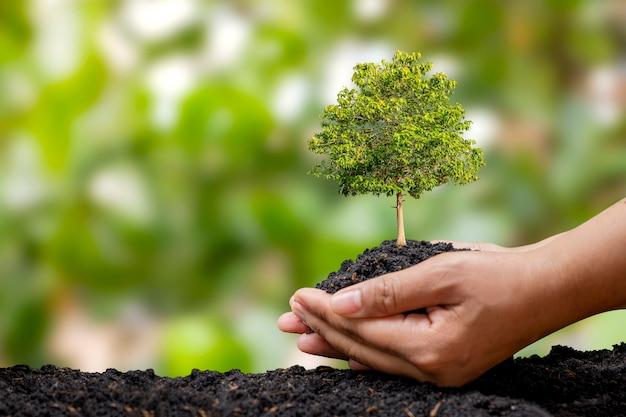 땅에 묘목을 심는 농부의 손과 녹색 배경은 조림과 사회적 조림 개념으로 흐릿합니다.
