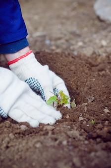 土壌に芽を植える農夫の手