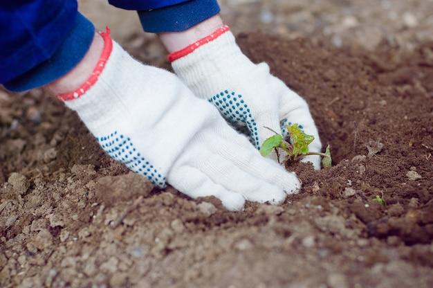 芽を植える農夫の手