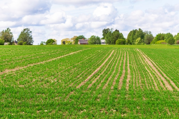 Дом фермера вдалеке. сельский пейзаж с возделываемым полем. поле вспахано и засеяно