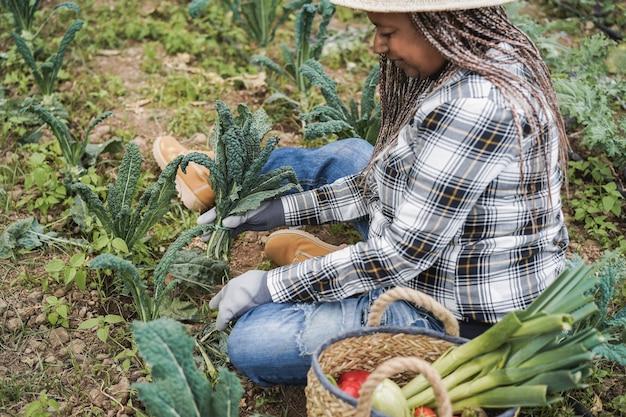 野菜を拾いながら温室で働く農家の年配の女性-トップハンドに焦点を当てる