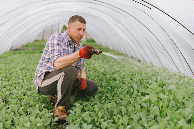 Farmer sitting in a greenhouse with a hose in his hand and watering seedlings of vegetables with a serious face