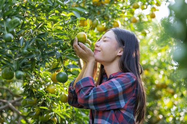 Фермер нюхает мандарин на дереве с радостным движением для сбора урожая в ближайшее время в саду.