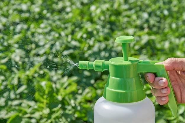 Фермер распыляет пестицид с ручным распылителем против насекомых на плантации картофеля в саду летом. концепция сельского хозяйства и садоводства