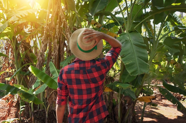 Farmer standing in front of  a banana tree plantation on a sunny day. portrait of a farmer in a farmland.