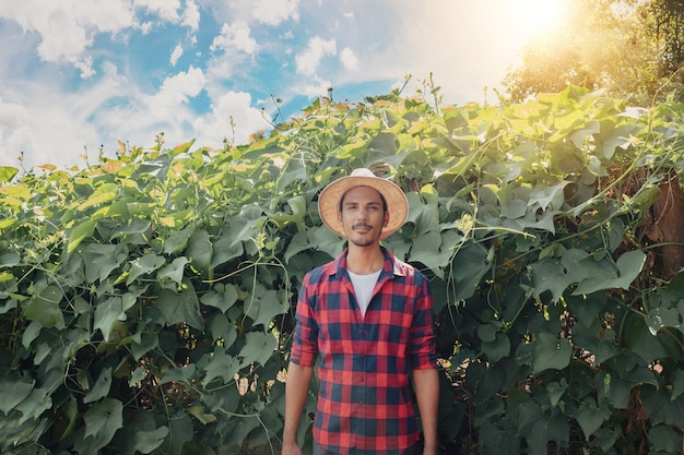 Farmer standing in front of the eggplant plantation on a sunny day. portrait of a farmer in a farmland.