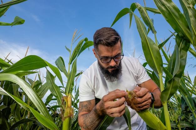 옥수수를 검사하는 옥수수 밭에 서있는 농부.