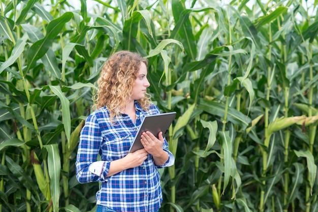 농부는 옥수수 밭에 서 태블릿을 사용하고 옆으로 스마트 농업 및 식품 제어를 찾고 있습니다.