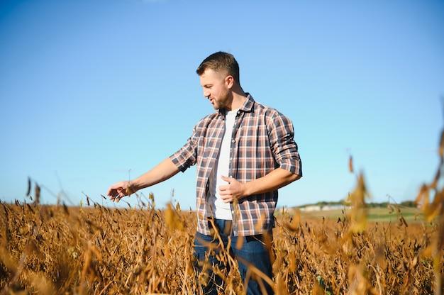 Фермер, стоящий в поле сои, изучает урожай на закате.