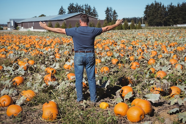 Farmer standing with arms outstretched standing in pumpkin field