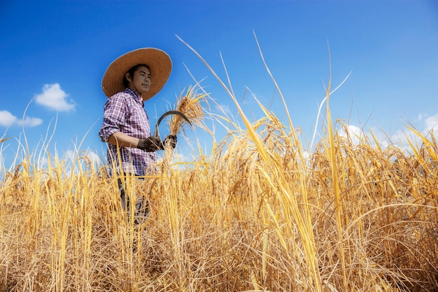 Farmer stood with a sickle and reaped in fields with blue sky.