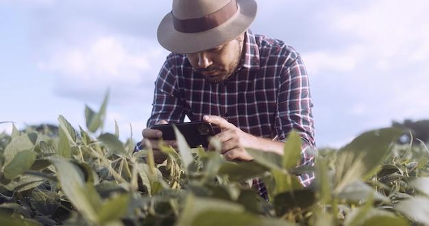 Farmer taking pictures of soybean plantation. quality control. agronomist's work. brazilian farm.