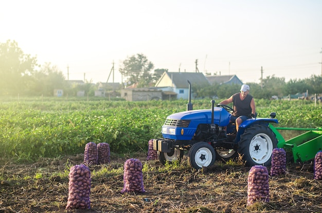 Farmer on a tractor drives across field and harvests potatoes. farming and farmland