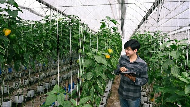Фермер с помощью цифрового планшета контролирует сельскохозяйственные продукты сбора урожая.