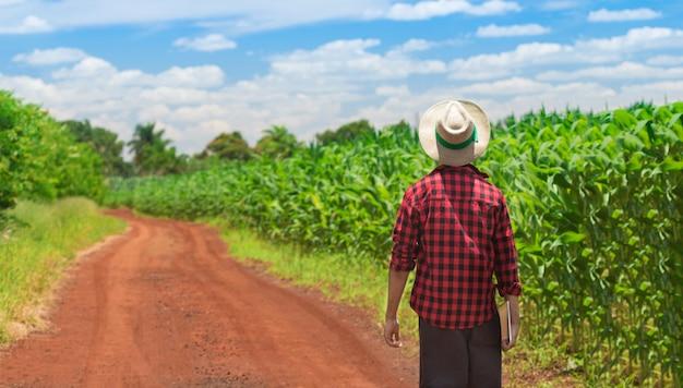 耕作されたトウモロコシ畑のプランテーションでデジタルタブレットコンピューターを使用している農民