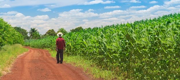 Фермер с помощью цифрового планшетного компьютера на плантации культурных полей кукурузы
