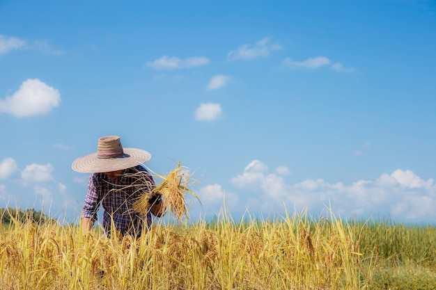Farmer using a scythe to reap in fields with blue sky.