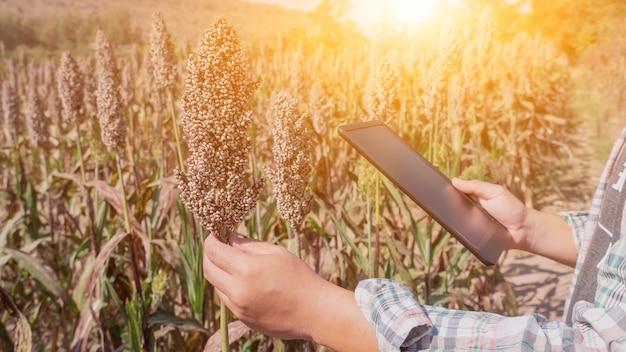 畑で農作物の品質をチェックするためにタブレットを使用している農家。秋の季節の秋の収穫の宝庫。