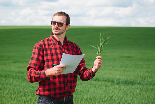 Фермер гуляет по зеленому пшеничному полю в ветреный весенний день и осматривает зерновые культуры