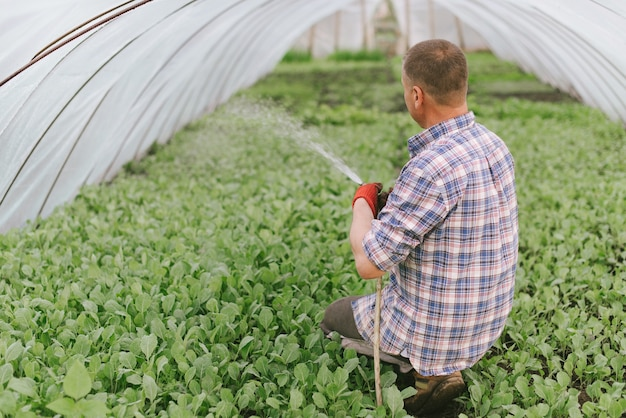 Farmer watering greenhouse.
