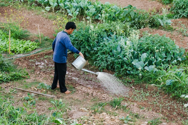 Farmer watering vegetable in thailand countryside.