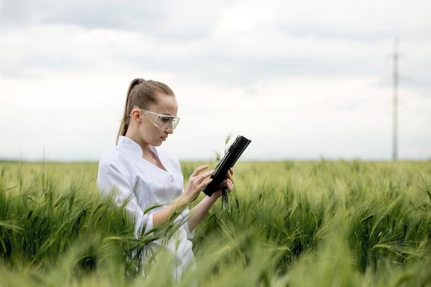 Фермер в белом халате проверяет прогресс урожая на планшете на зеленом пшеничном поле.
