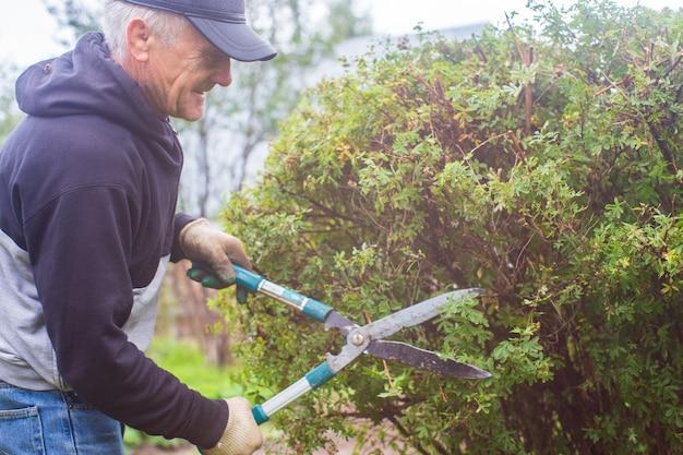 큰 정원 가위로 덤불 가지치기를 하는 농부 원예 도구 농업 개념