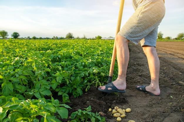 若いジャガイモの新鮮な収穫の近くにシャベルを持っている農夫収穫の収穫