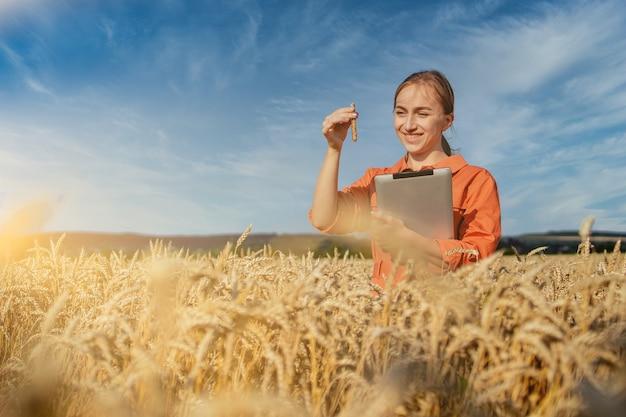 Фермер с таблеткой и пробиркой исследует растение в пшеничном поле. концепция сельского хозяйства и сбора урожая. агробизнес.