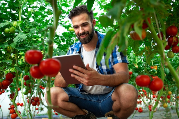 Фермер с планшетным компьютером, проверяющий качество и свежесть томатных овощей на ферме по производству органических продуктов