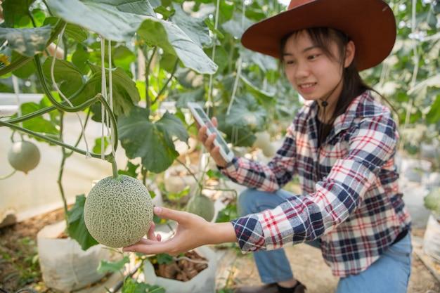 温室で有機水耕菜園を作業するためのタブレットと農家。スマート農業、農場、センサー技術の概念。温度を監視するためのタブレットを使用して農家の手。