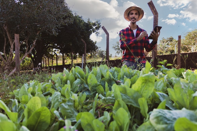 Farmer with tablet in front of a lettuce field. using digital support on the farm at sunset.