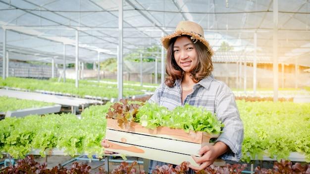 농부 여성은 수경 농장에서 야채 유기농 샐러드, 양상추를 수확합니다