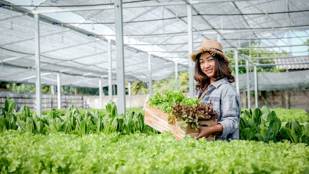 Farmer woman harvests lettuce from a hydroponic farm.