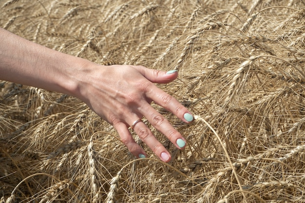 A farmer woman runs her hand over the ears of ripe wheat in a field on a sunny summer day.