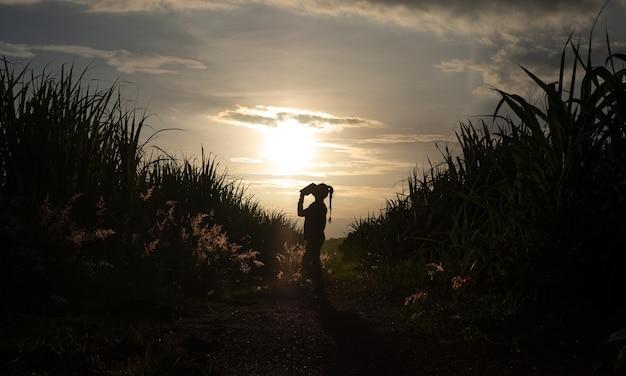 일몰 저녁에 사탕수수 농장에 서 있는 농부 여성 실루엣