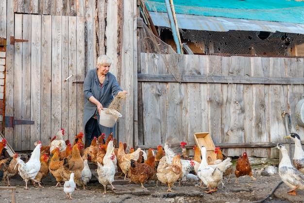 鶏の餌のバケツを持つ農家の女性
