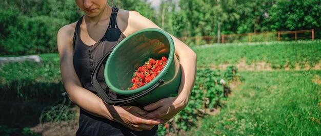 収穫時に畑に新鮮な有機イチゴのバケツを持つ農家の女性