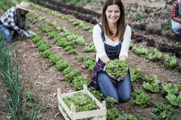 상추 식물을 줍는 동안 온실에서 일하는 농부 여자