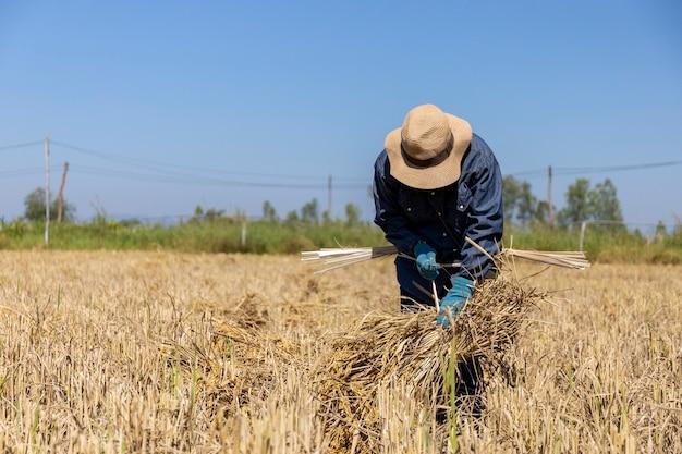 농부 작업 쌀 모종 심기 준비