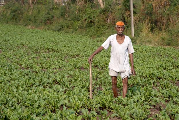 Farmer working in beetroot field, an indian rural farming scene.