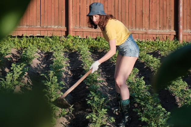 농업에서 일하는 농부는 잡초를 제거하고 토양과 언덕을 형성하기 위해 괭이를 들고 제출했습니다.