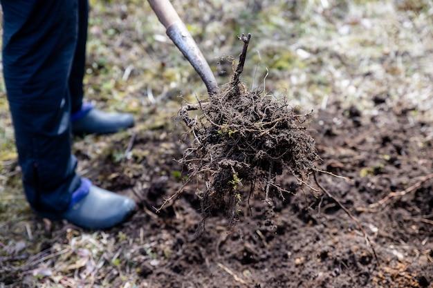 春に庭で働いている農夫。草原の有機肥料、採掘と植栽のための庭の準備農業、農業、有機園芸