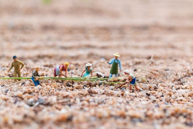Farmer working plot in the desert