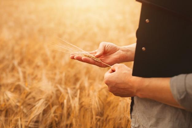 Farmer writing on a document the wheat development plan. farmer checking wheat field progress.