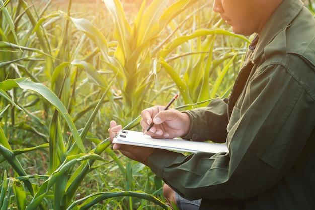 農家は畑でトウモロコシの成長を記録しています